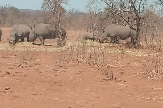Short Rhino safari walk. photo 36