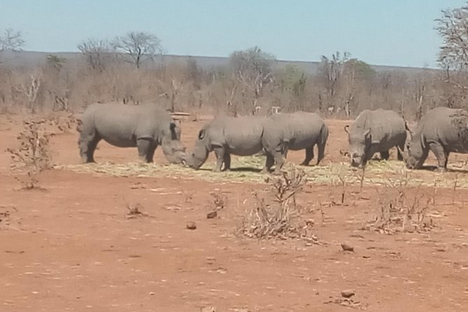 Short Rhino safari walk. photo 29