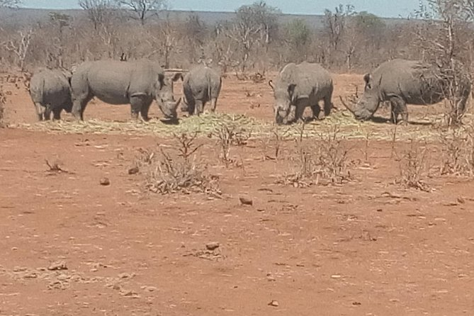 Short Rhino safari walk. photo 21