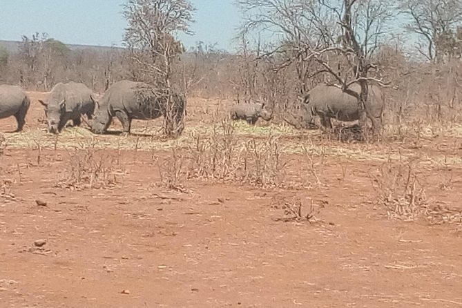 Short Rhino safari walk. photo 37