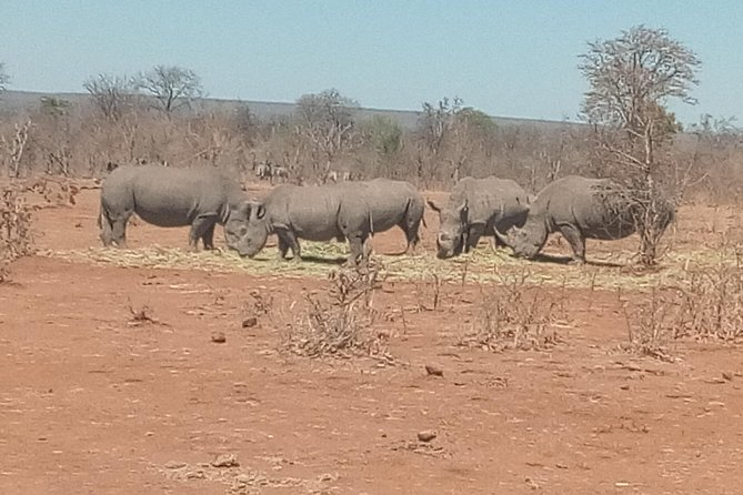 Short Rhino safari walk. photo 27