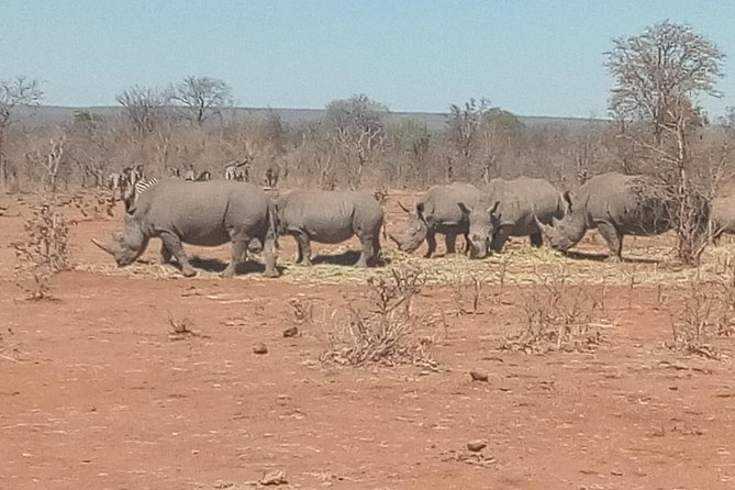 Short Rhino safari walk. photo 33