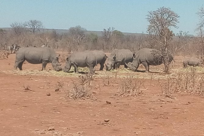 Short Rhino safari walk. photo 8