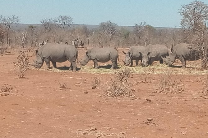 Short Rhino safari walk. photo 16