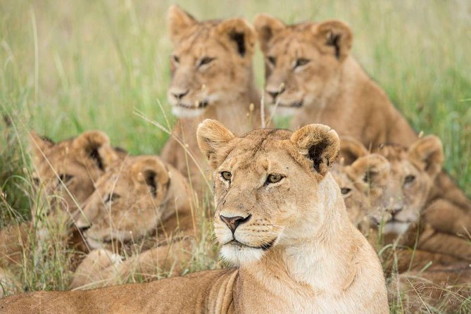 5 Day Tanzania Adventure Wildlife Safari photo 1