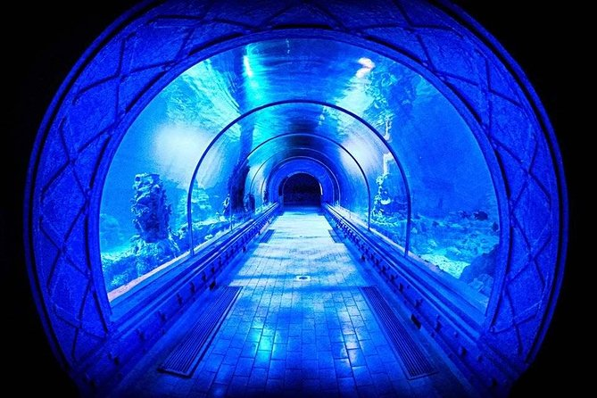 Grand Aquarium - see underwater world without wet . photo 4