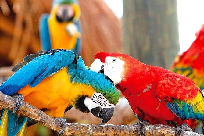 National Aviary & Mambo Beach Club Baru - Playa Blanca