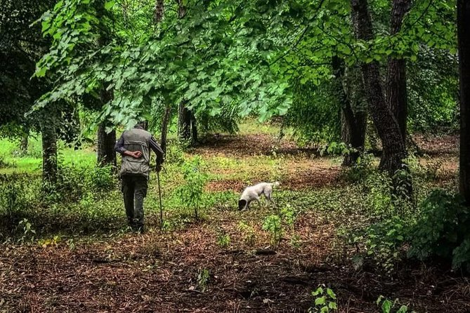 Alba Truffle Hunting Tour Experience in Piemont