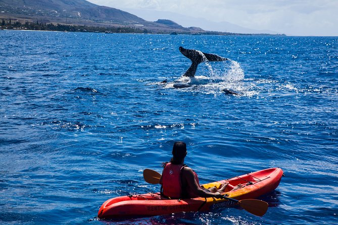 West Maui Whale Watching and Snorkeling Excursion photo 4