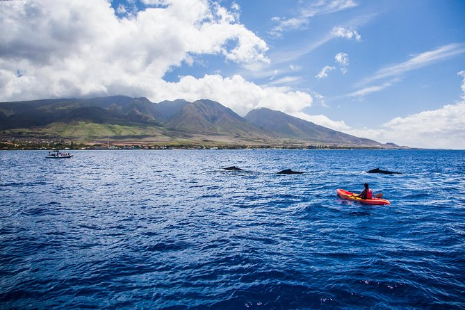 West Maui Whale Watching and Snorkeling Excursion photo 1