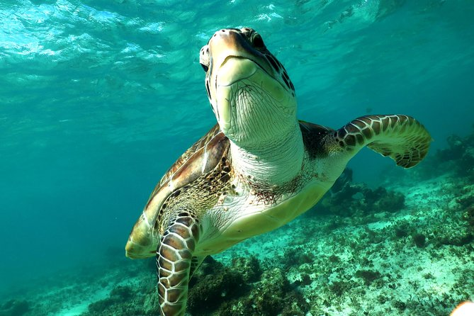 Turtles and Cenote snorkeling tour from Riviera Maya