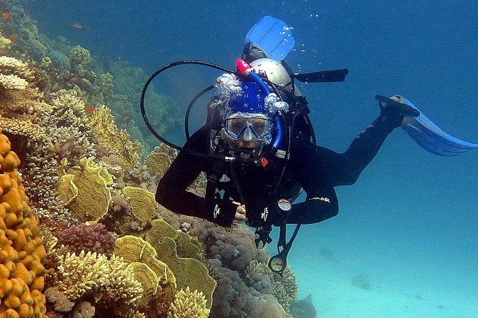 Diving Tour in Hurghada photo 2