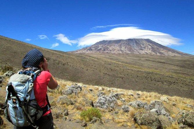Kilimanjaro Day Hike - Shira Route