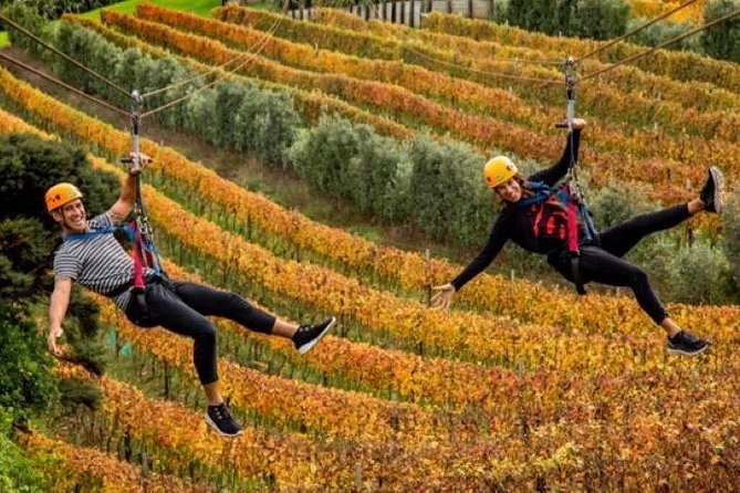 Waiheke Island: Zipline and Island Small Group Day Tour from Auckland