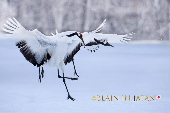 Kushiro 1-Day Wildlife Photography Workshop: Red-Crowned Cranes