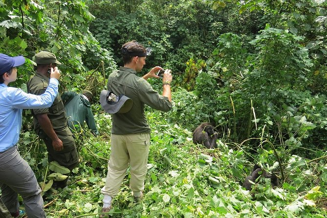 Gorilla Trekking Experience in Bwindi Impenetrable National Park photo 1