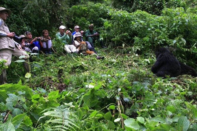 Gorilla Trekking Experience in Bwindi Impenetrable National Park photo 10