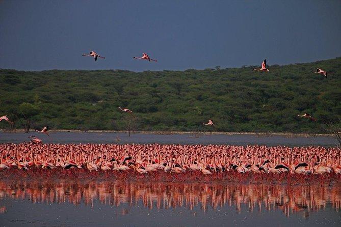 Overnight Flamingo Watching Safari: Lake Bogoria & Lake Nakuru