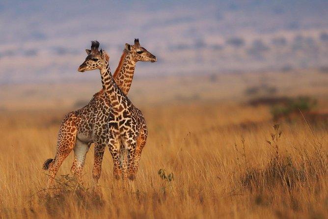 6 Days Masai Mara / Nakuru NP / Amboseli NP