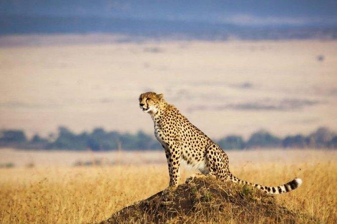 4 Days Masai Mara & Lake Nakuru Lodge Safari