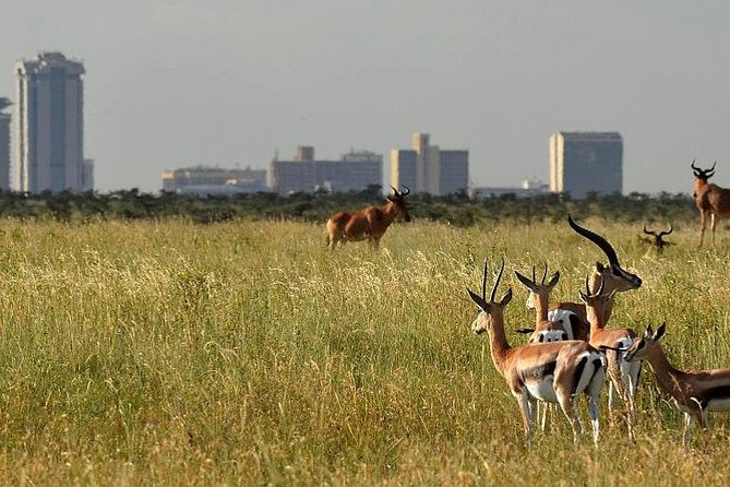 Half Day - Nairobi National Park Safari
