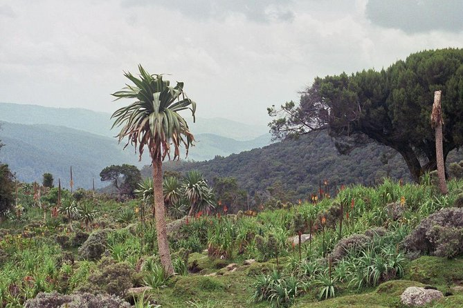 3 Days Bale Mountains Trekking