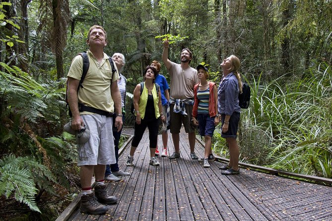 Bay of Islands Shore Excursion: Puketi Rainforest Guided Walk