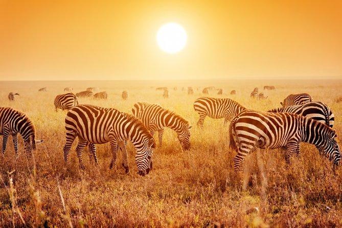 6 Day Lodge Safari - Tarangire – Manyara – Serengeti – Ngorongoro Crater