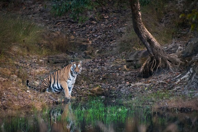 Experience Tiger Safari in Pench National Park