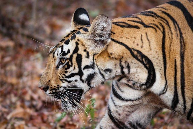 2N Tadoba Tiger Safari (Pocket Friendly Tour)