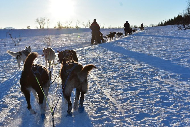 Dogsledding & Ice Domes Guided Tour