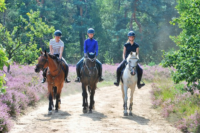 Horse Riding in Dutch coastal dunes - Private Group Tour