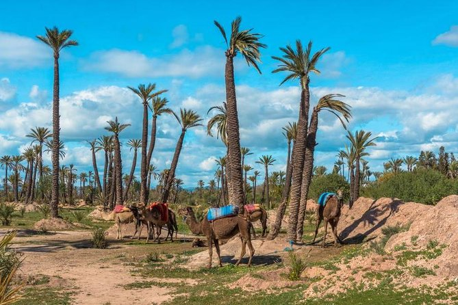 Marrakech Desert Quad Biking and Camel Ride with Teak Break photo 6