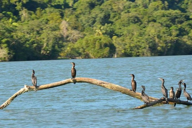 Kayak -Bird Watching Combo Tour from Puerto Quetzal
