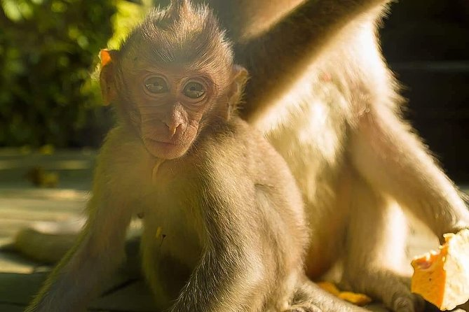Monkey Forest, Mount Batur Volcano & Waterfall Tour