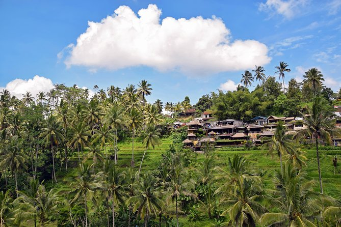 Kintamani & Ubud Full Day Tour with Hotel Transfers photo 3