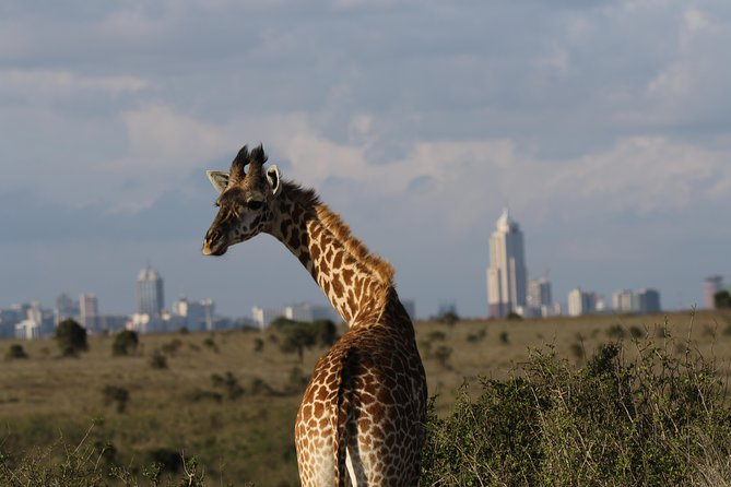 Nairobi National Park guided tour