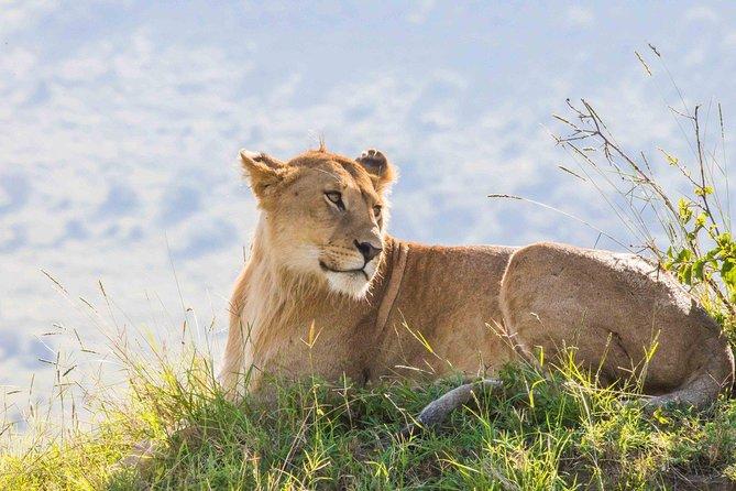 Maasai Mara Daily Departure