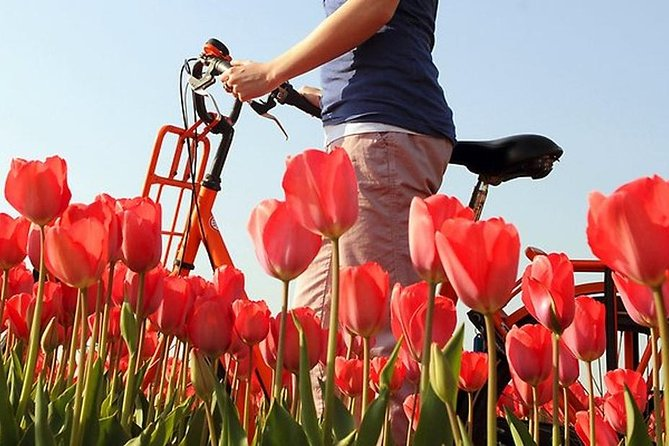 Holland Private Tour - Bicycle Tour
