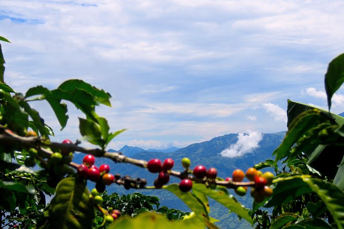 Eco-exploration Coffee and Rainbow waterfall tour in Jericó photo 10