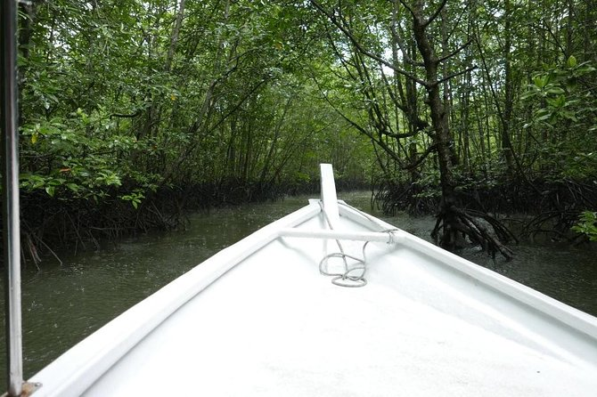 Langkawi Mangrove Forest and Cave Exploring Tour photo 3