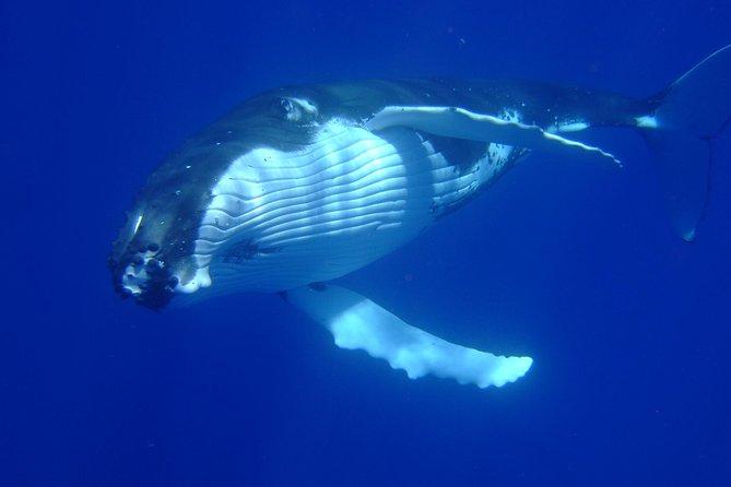Private Tour: Bora Bora Whale Watching & Swimming Experience