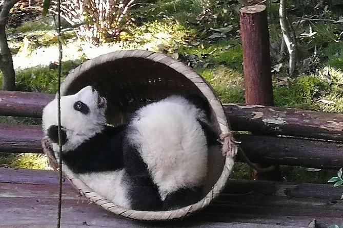3 Days Chengdu Panda base and Leshan Buddha Visit with Cooking Class