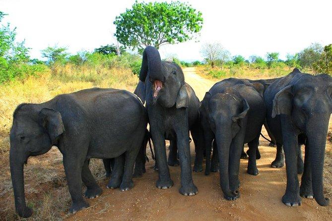 Morning Private Safari at Udawalawa National Park by Yala La Safari Tours