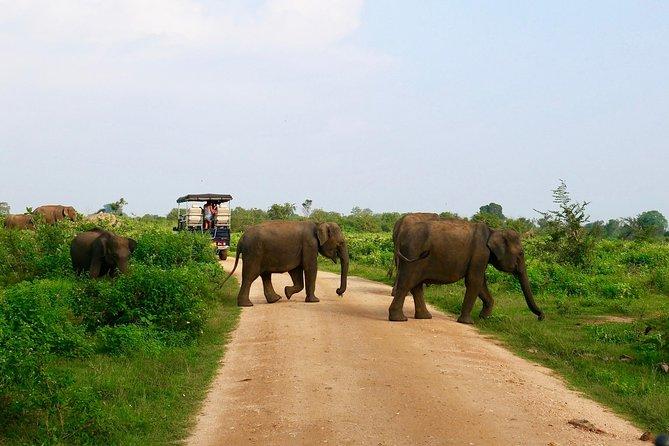 Morning Private Safari at Udawalawa National Park by La Safari inn Tours