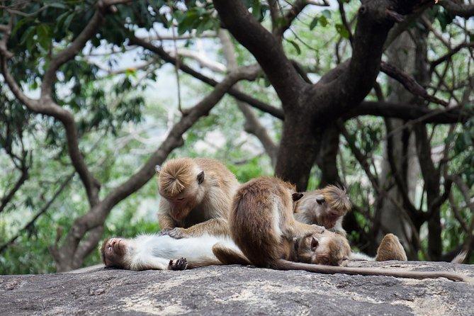 Enchanting Sri Lanka (18 Days)