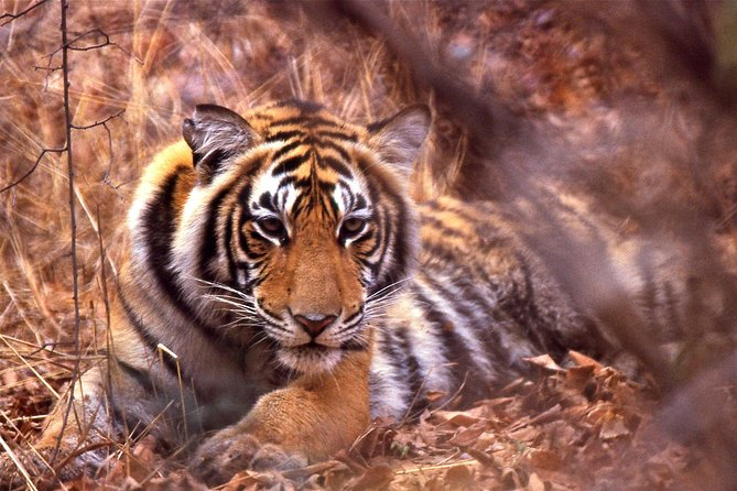 Full Day Private Tour from Jaipur to Fascinating Ranthambore National Park