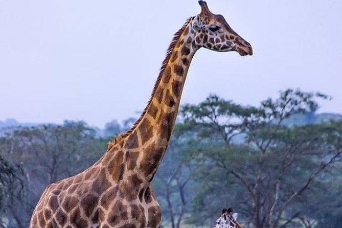 4 Days 3 Nights safari to Ruaha National Park photo 6
