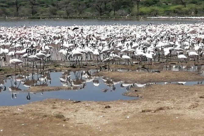 2 Days: Lake Naivasha, Hells Gate & Lake Nakuru Tour photo 2