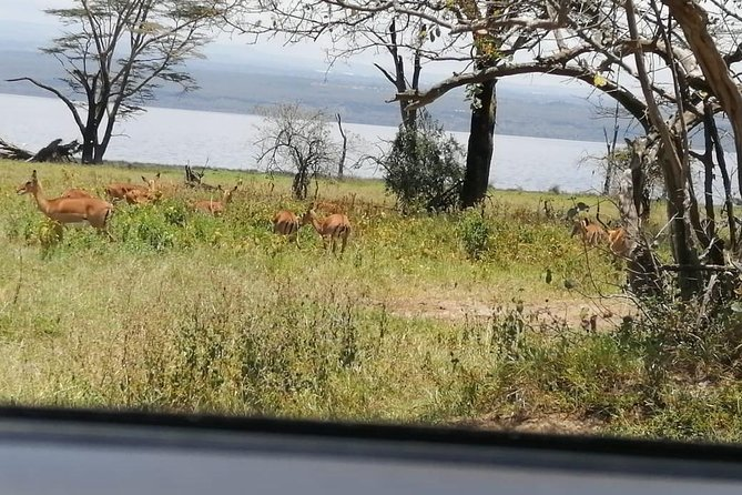 2 Days: Lake Naivasha, Hells Gate & Lake Nakuru Tour photo 4